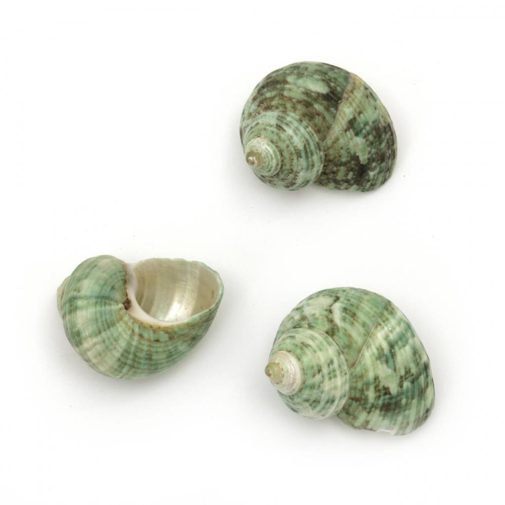 Морски раковини 25±40x25±36x16±22 мм цвят зелен дупка 1 мм ±50 грама