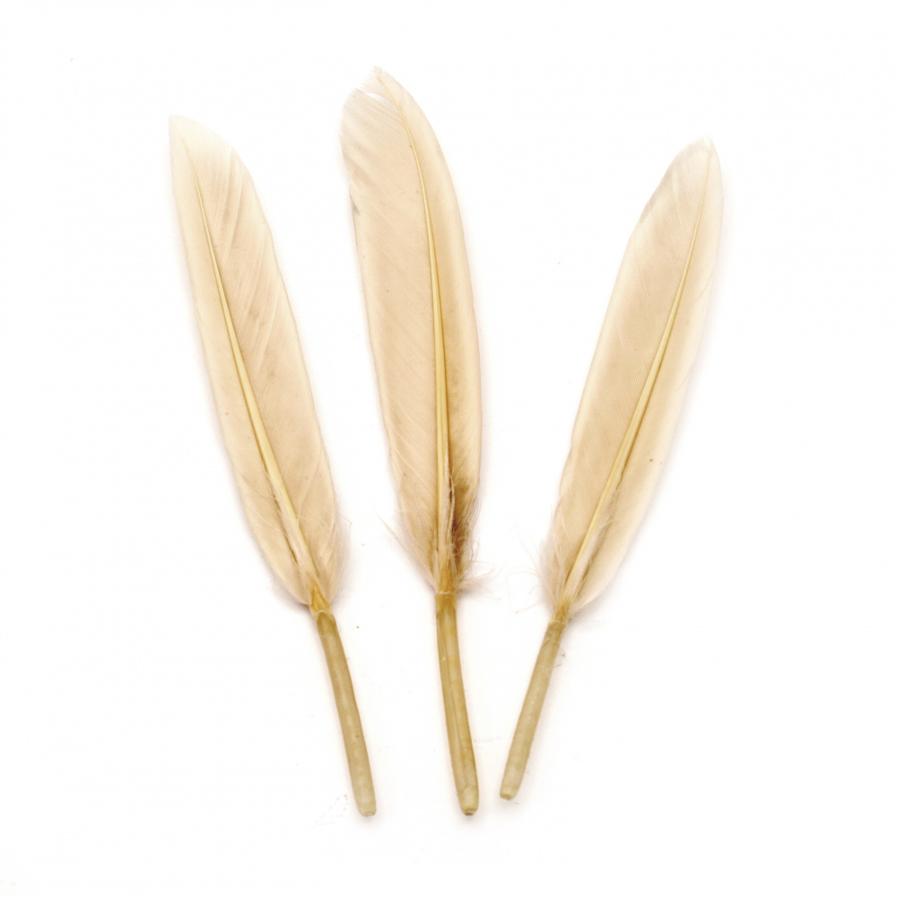 Feather  for decoration 100~ 150x15~20 mm cream - 10 pieces