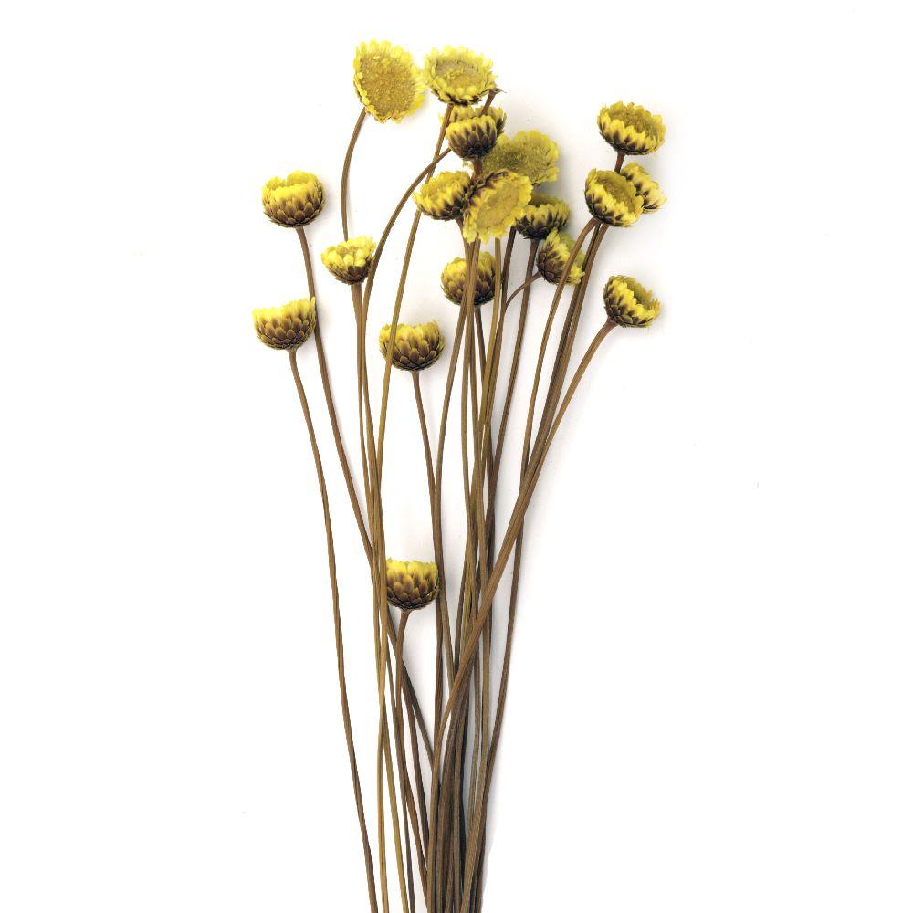 Букет сухи цветя за декорация цвят жълто ~21 броя