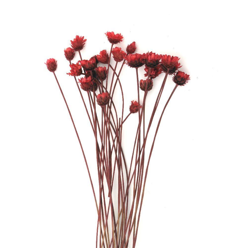 Букет сухи цветя за декорация цвят червен ~21 броя