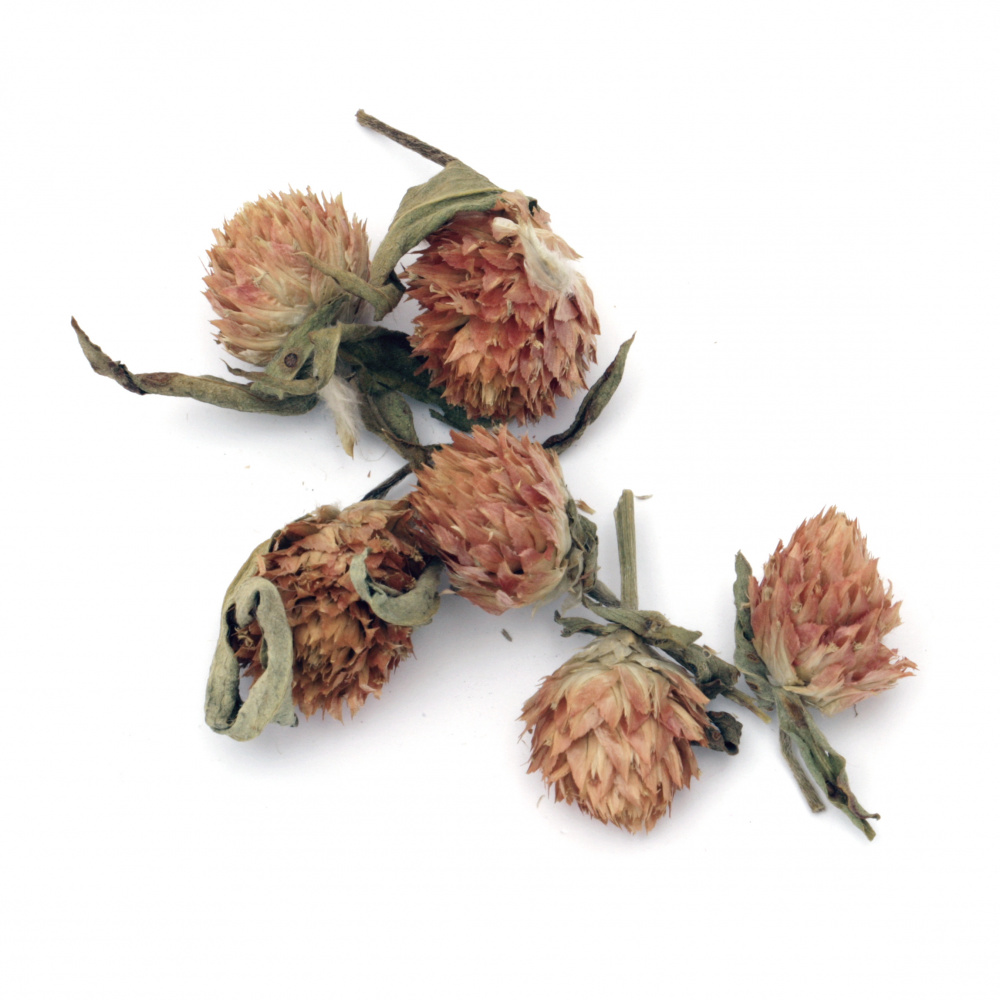 Dry flowers for decoration color natural -20 grams