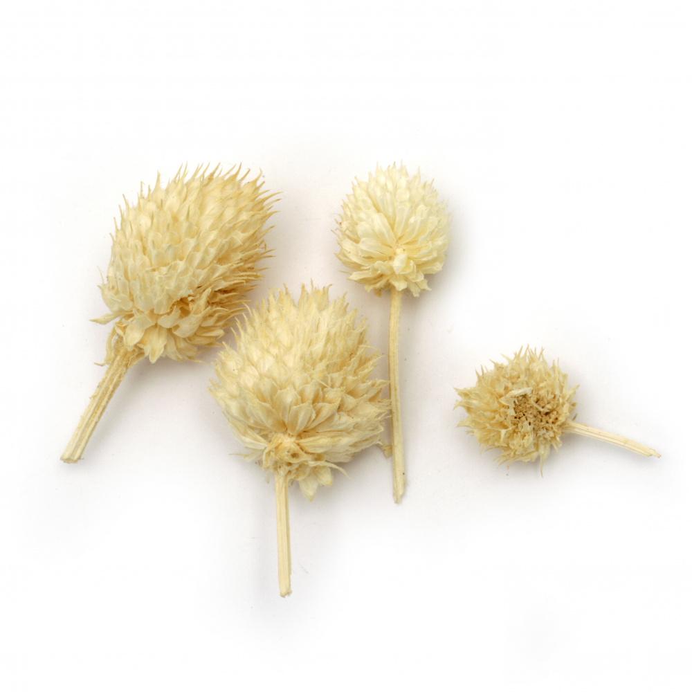 Flori naturale uscate pentru decorare culoare naturală -10 grame