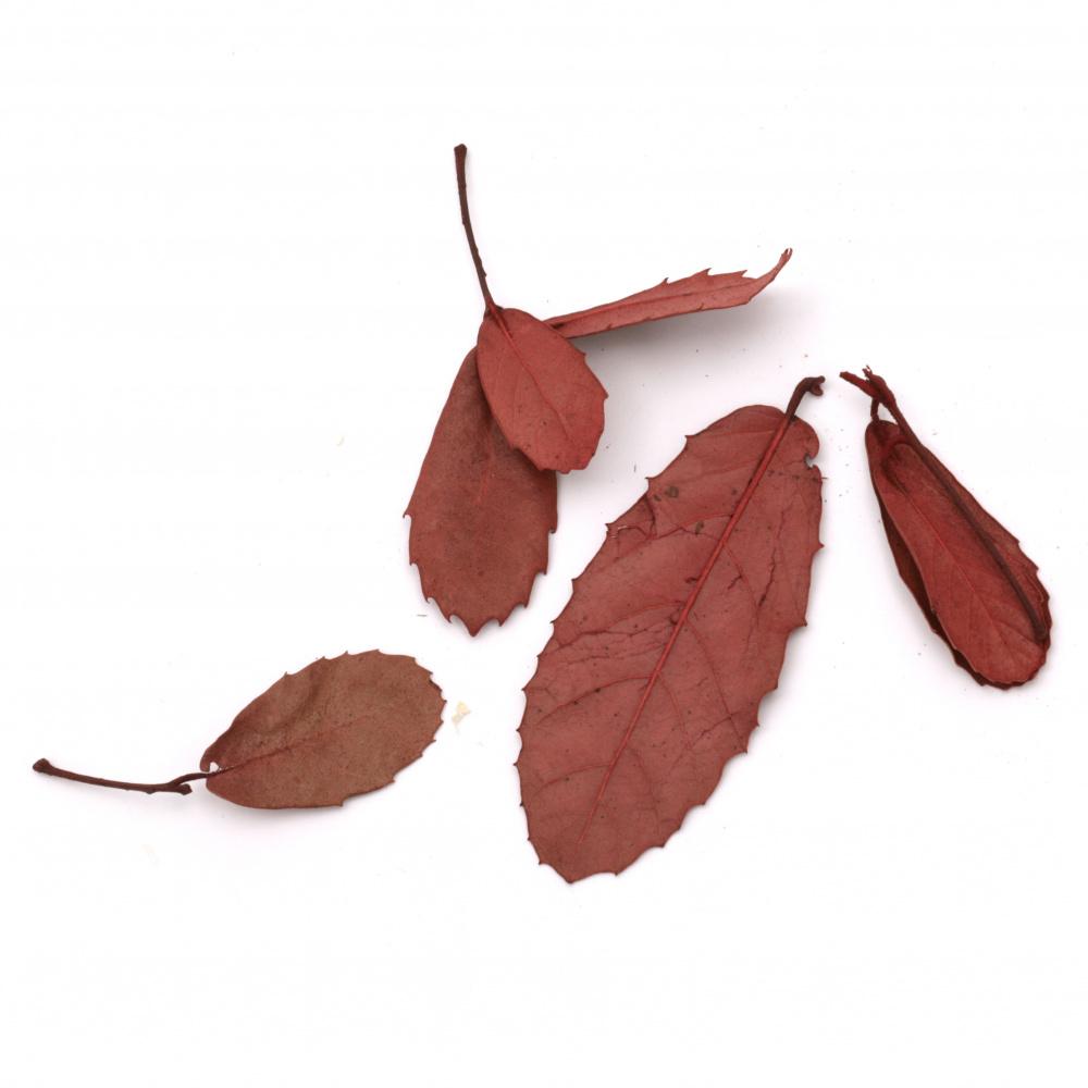 Frunze naturale uscate pentru decorare culoare roșu -10 grame