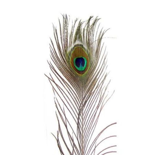 Peacock feather for decoration 90-100 cm
