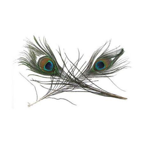 Pene de păun 25-30 cm