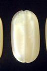 Χάντρα πλακέ κύλινδρος 29x15x4 mm λευκό απομίμηση νεφρίτη -50 γραμμάρια