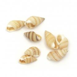 Scoici  de mare 10 ~ 14x5 ~ 7 mm culoare albă, Peru -50 grame