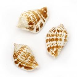 Морски раковини 43~47x27~30x20~22 мм дупка 1.5 мм 5~6 броя ~50 грама