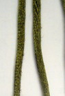 Cord polyamide shiny 2 mm green dark -10 meters