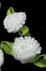 Роза шапка 10 мм с листо бяла -50 броя