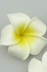 Frangipani plumeria, rubberized flower 55 mm white yellow - 5 pieces