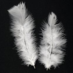 Φτερό 120 ~ 170x35 ~ 40 mm λευκό -10 τεμάχια