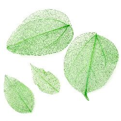 Skeletal leaves 60x20 ± 90x45 mm for decoration color green -20 pieces