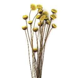 Bouquet of dried flowers for decoration color yellow ± 21 pieces