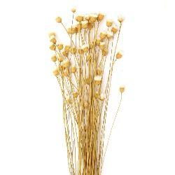 Букет сухи цветя за декорация цвят светло жълто ~63 броя