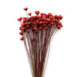 Букет сухи цветя за декорация цвят оранжев ±63 броя