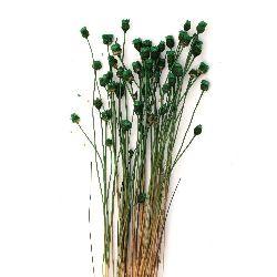 Αποξηραμένα λουλούδια πράσινο  ~ 63 τεμάχια