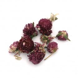 Flori uscate pentru decorare culoare violet -20 grame