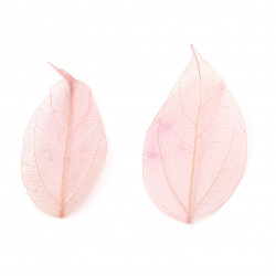 Skeletal leaves 60x20 ~ 90x45 mm for decoration color pink -20 pieces