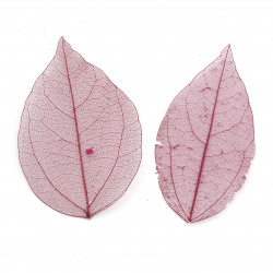 Skeletal leaves 60x20 ~ 90x45 mm for decoration color dark cyclamen -20 pieces