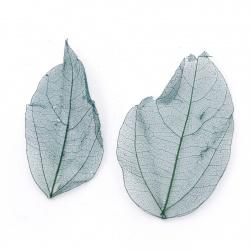 Frunze schelet 60x20 ~ 90x45 mm pentru decorare culoare turcoaz -20 bucăți