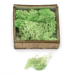 Scandinavian polar moss for decoration,  light green - 10 grams