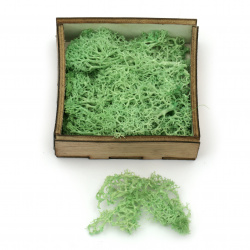 Scandinavian polar moss for decoration,  green - 10 grams