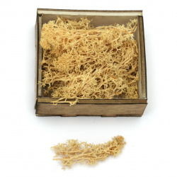 Scandinavian polar moss for decoration,  yellow - 10 grams
