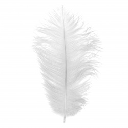 Φτερό στρουθοκαμήλου 300 ~ 350 mm λευκό