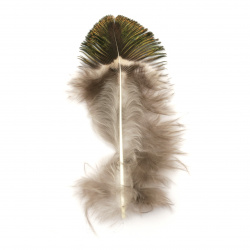 Peacock feather for decoration 40~80 mm - 5 pieces