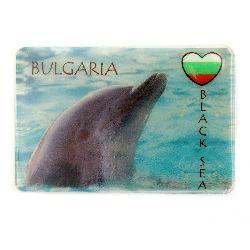 Souvenir magnet luminous 74x50 mm plastic dolphin