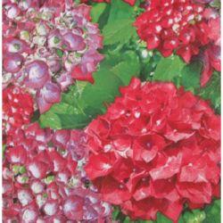 Napkin for Decoration Decoupage  3-ply , 33x33cm, 1 piece