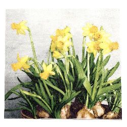 Салфетка HOME FASHION 33x33 см трипластова Narcissus -1 брой