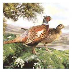 Салфетка за декупаж Ambiente 33x33 см трипластова Pheasant -1 брой